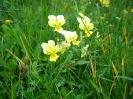 Blumen_16