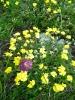 Blumen_22