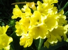 Blumen_6