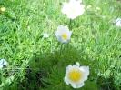 Blumen_9